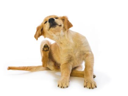 scratching-puppy