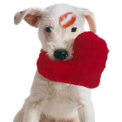 valentine_dog