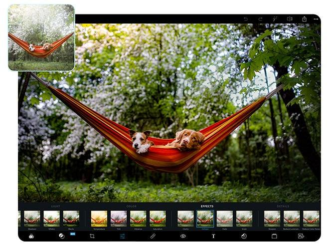 The Top 16 Paid and Free Photo Editors Online in 2021