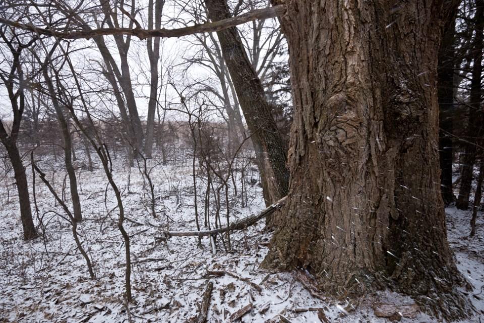 Big Cottonwood Near the Pump - Snow Storm Coming