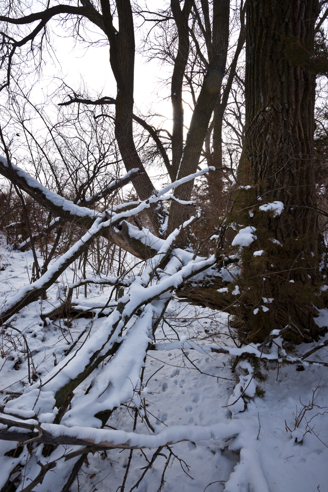 Second Snow East Branch Draw under a Tree CU