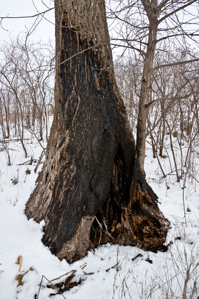 Second Snow East Branch Draw - Burnt Cottonwood