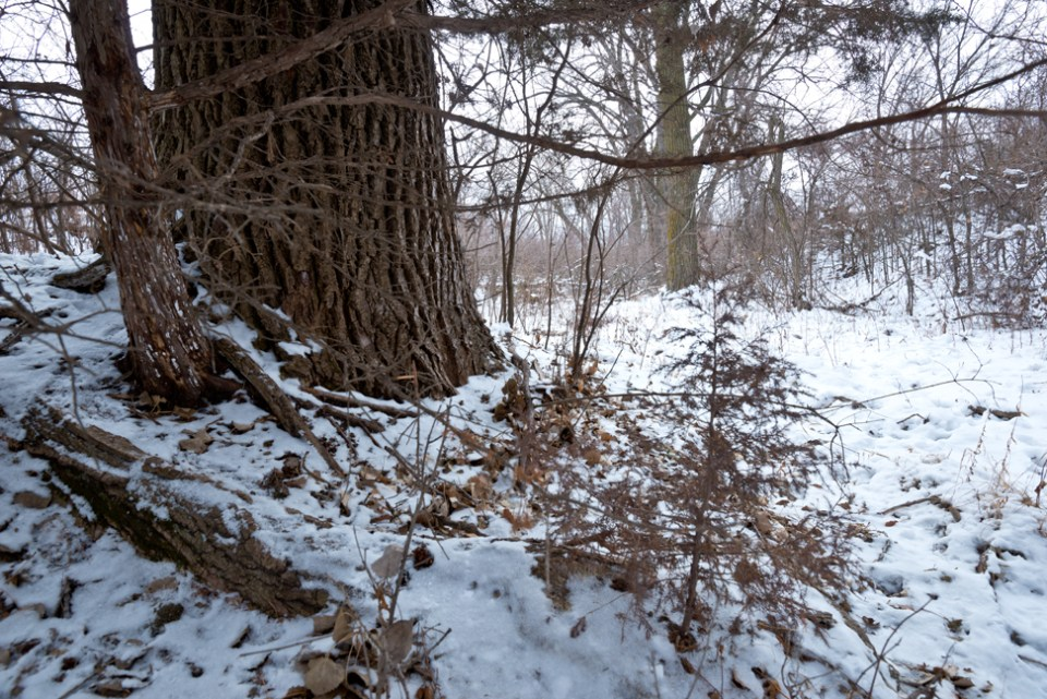Second Snow East Branch Draw - Clearing Edge