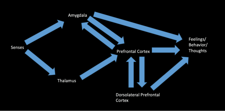 model-of-neural-pathways