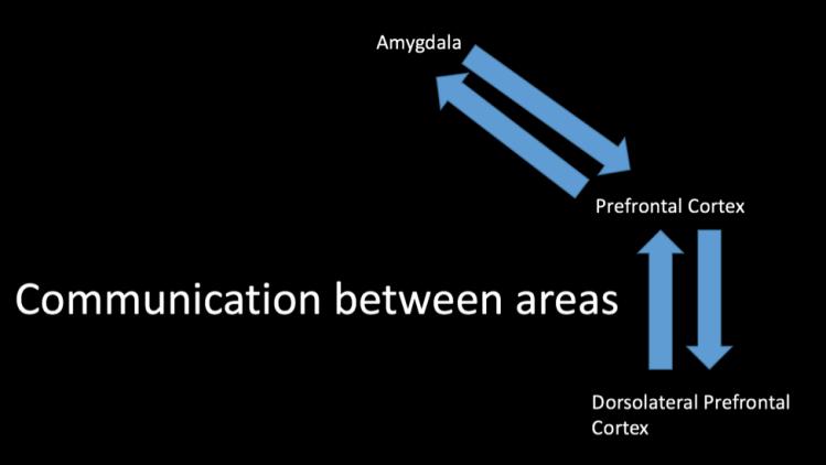 neural-communication