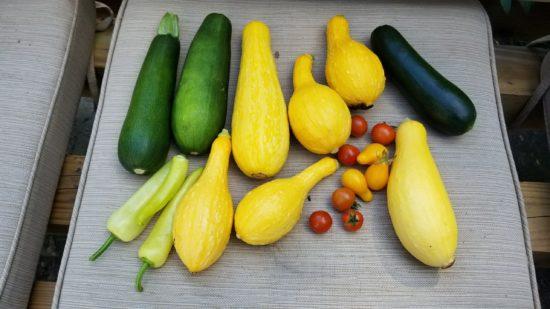 garden prepper, survival, seed, preparedness, garden, gardening