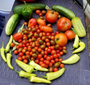 prepardness, survival, garden, gardening, prepper, SHTF