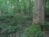 Shell Holes Bernafay Wood