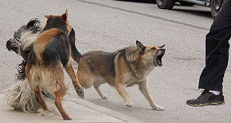 4 perros atacaron niño de 10 años en Armenia