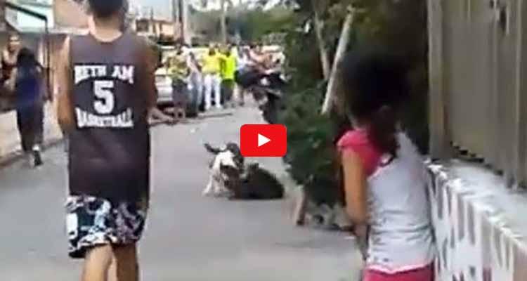 pitbull en Armenia tiene atemorizada a la comunidad de La Fachada