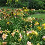 Mansfield In Bloom Seeks Volunteers