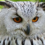 Ohio Bird Sanctuary Unveils New Website