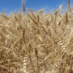 You Can Help Farm Bureau Develop Policy