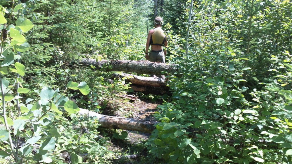 Down Trees in National Forest Trail