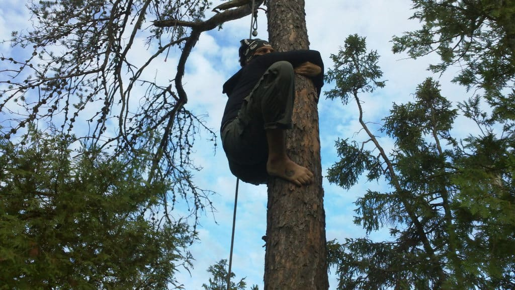 Climbed Tree to Get a Bear Rope