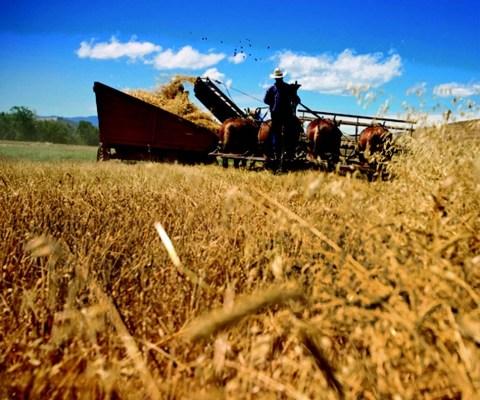 2009-Autumn-Central-Oregon-People-Terrebonne-McIntosh-family-farmers