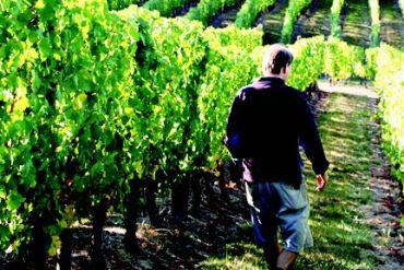 2010-Spring-Oregon-Wine-Travel-Gaston-Big-Table-Farm-vineyard