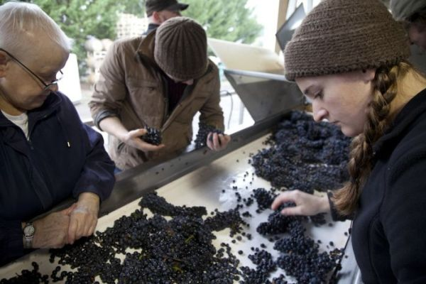 2012-september-october-1859-magazine-willamette-valley-oregon-wine-crush-sorting-grapes