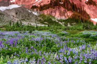 1859-oregons-birthday-photo-contest-central-oregon-canyon-creek-meadow-ladybug-sunrise-kristin-wolter-second-place