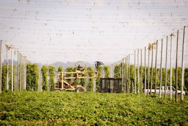 2013-november-december-1859-magazine-willamette-valley-oregon-hops-beer-goschie-farms-harvest