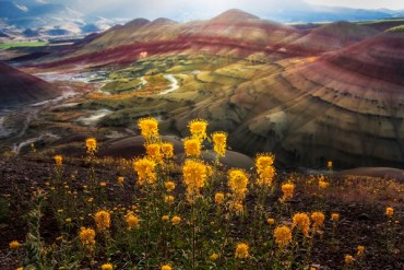1859_wildflowers_stephanie_hinson_1