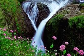 May_June_2015_Wildflowers_Gallery_MattPayne_001