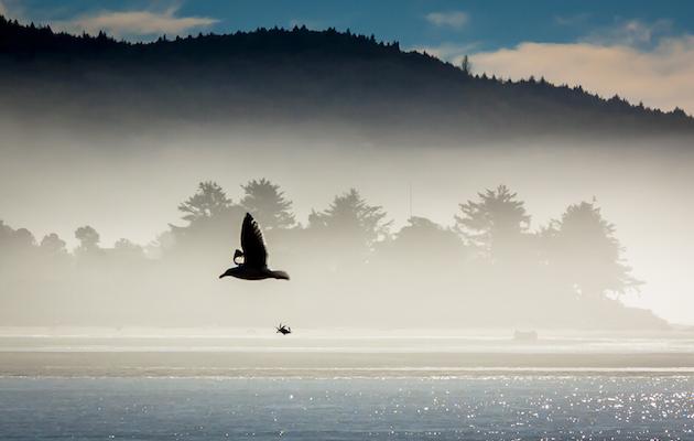 Photo-of-the-Week_Gary-Roberts_November-23_Lincoln-City-Oregon_630x400