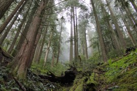 oregon_hikes_Badger_Creek_Karyn_Gibson