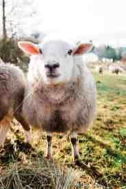 cameron-zegers-photography-1889-lamb-farm-50