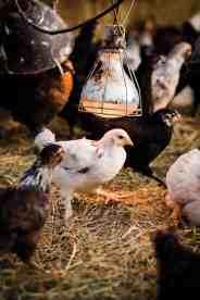 cameron-zegers-photography-1889-lamb-farm-66