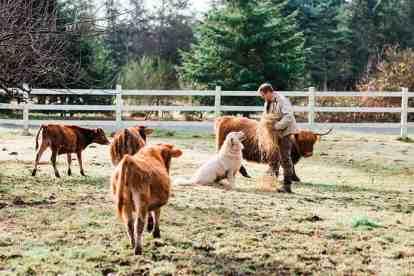 cameron-zegers-photography-1889-lamb-farm-93