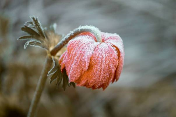 Image result for first cold day frost of season free images