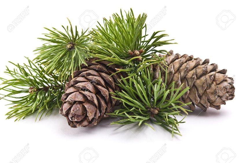 pine 1911hub