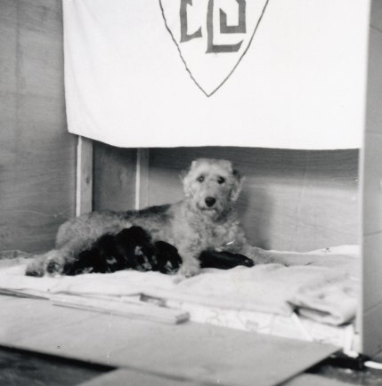 Schweppes, ELS dog, and pups '66