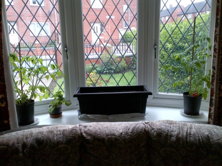 Big trough planter in front bay window