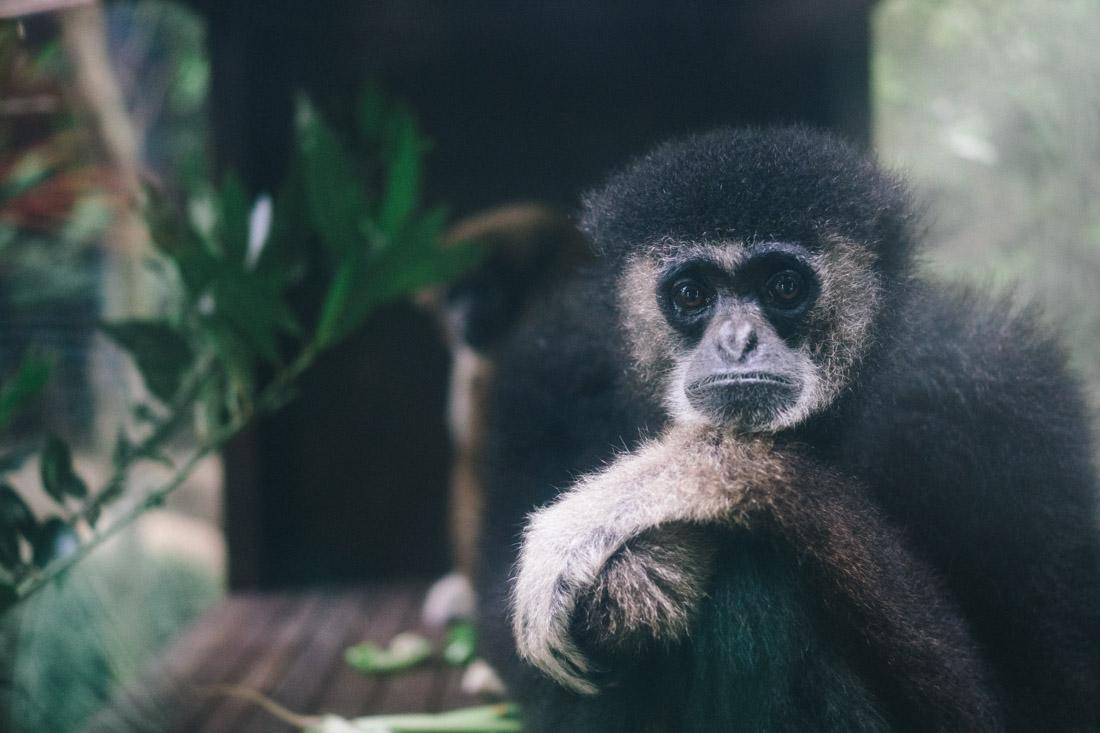 Sad macaque.