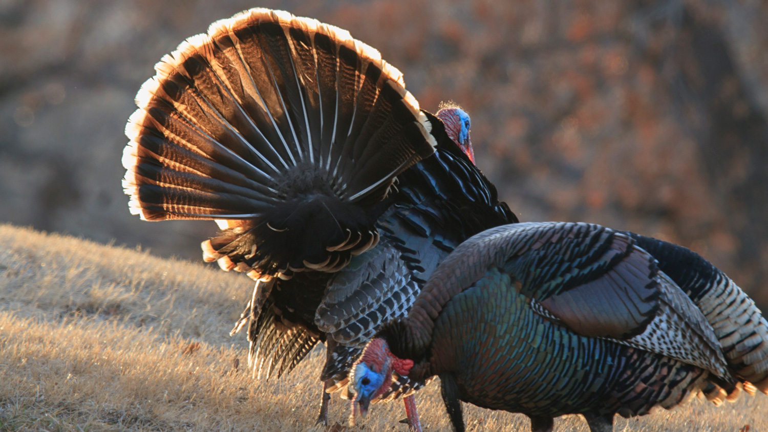 Thanksgiving Facts Or Fiction Answers