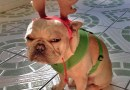 Pets That Really LOVE Christmas More Than Anything