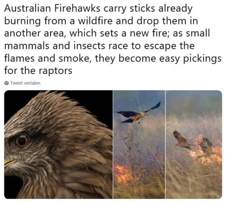 Some birds just want to watch the world burn