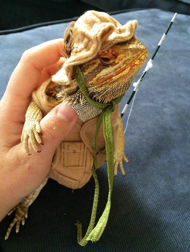 Pet lizard in a funny costume.