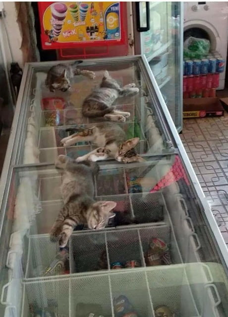 The street is very hot, so the saleswoman allows kittens to go to the store and sleep on the freezer)
