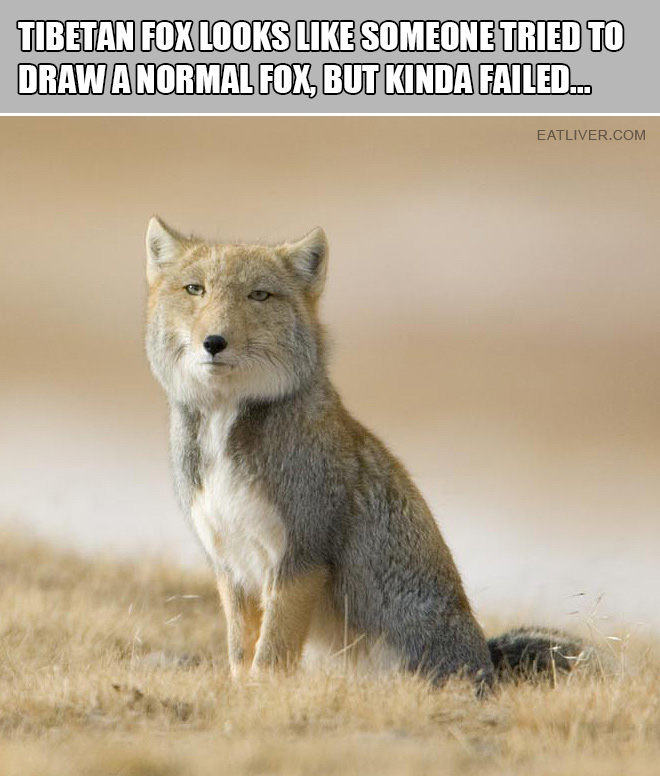 It looks like someone tried to draw a normal fox, but kinda failed.