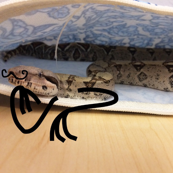 Snake with doodle arms.