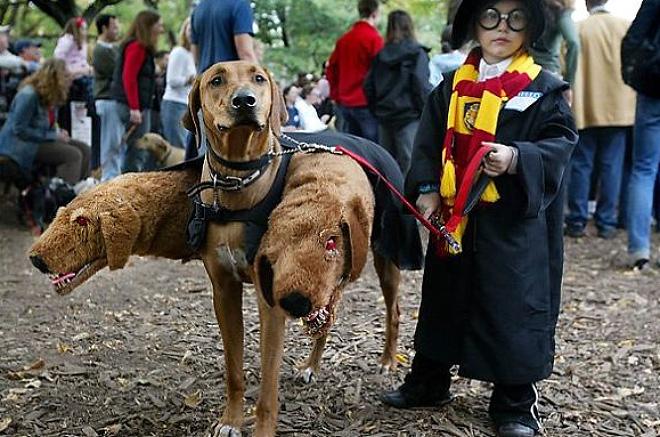 Funny Cerberus Halloween costume.