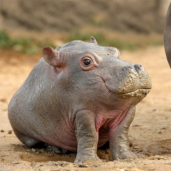 Animals are much funnier without necks.