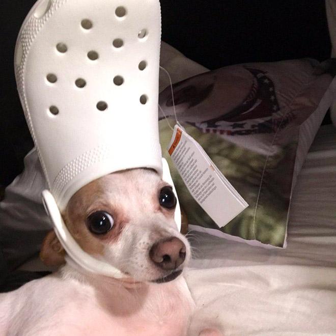 Beautiful Crocs hat.