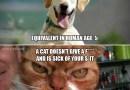 Intelligence: Dogs vs. Cats
