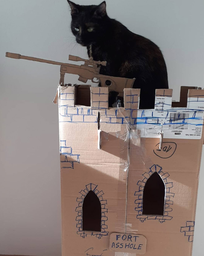 Perfect house for your cat.