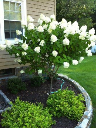 Flowering Trees Bring Beauty To Landscaping in Westchester County smal flowering tree