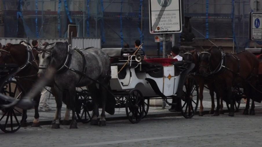 Carruagem Cidade Velha